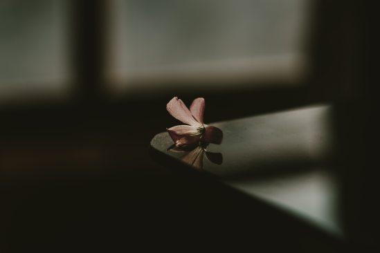blurred-background-close-up-dark-1195214