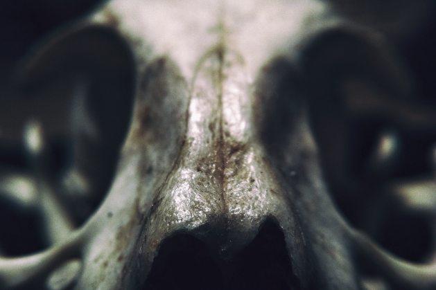 abstract-anatomy-art-blur-208139